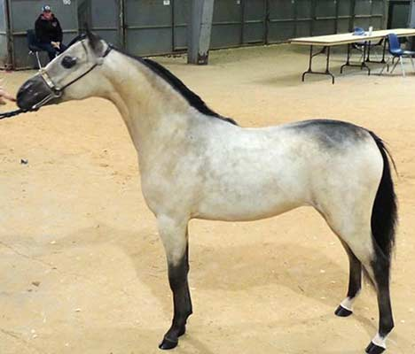 http://lilachillstables.com/mares_files/Cross-Country-Gold-Dust-Woman-sm.jpg