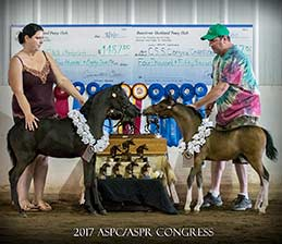 http://lilachillstables.com/mares_files/PearlFoals/Lilac-Hills-Keno's-Aria-1-sm.jpg
